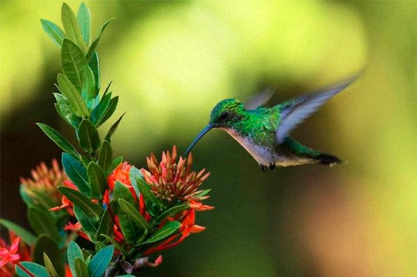 Quando você vê um beija-flor, uma alma amada veio visitá-lo