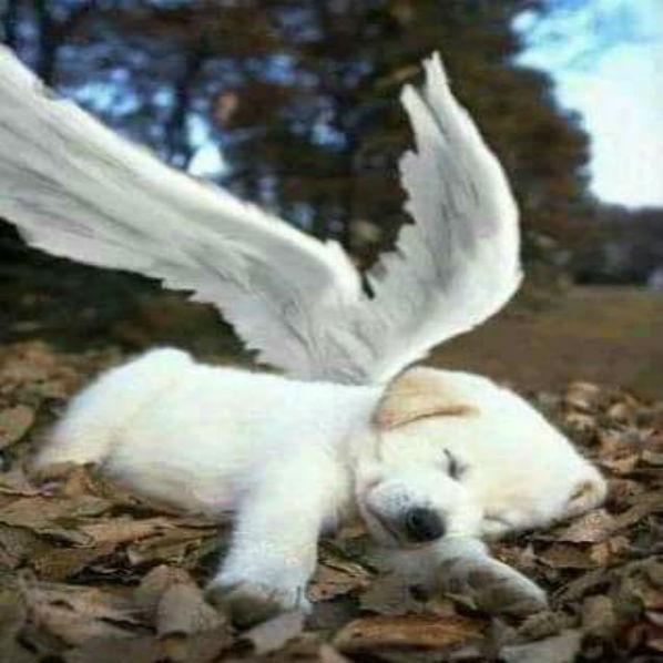 Os cães nunca morrem, eles dormem ao lado do seu coração
