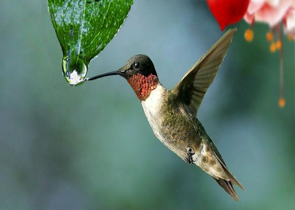 A história do beija-flor que mudará a maneira como você vê a Vida