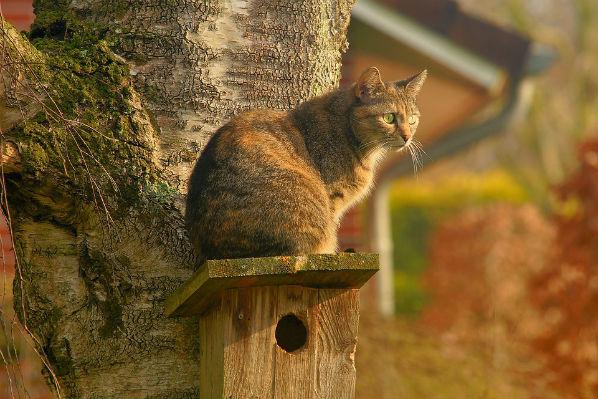 Os gatos são nossos guardiões no mundo da Energia
