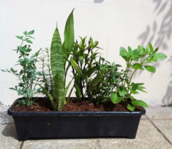 Sensitiva Márcia Fernandes e as 7 Plantas que Afastam Maus Espíritos da sua Casa!